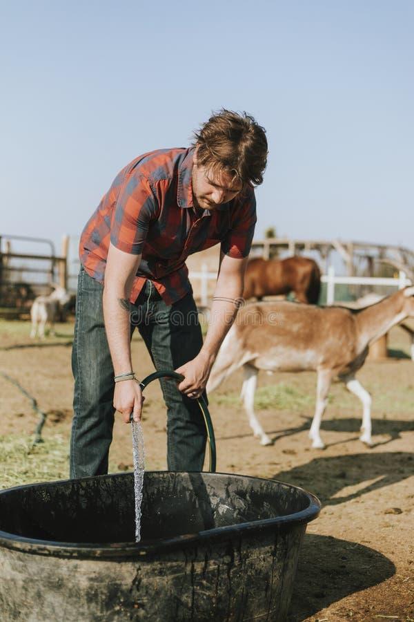 Landwirt, der eine Wanne mit Wasser füllt stockfotografie