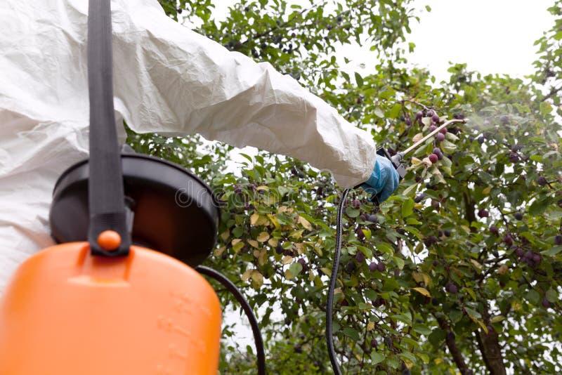 Landwirt, der giftige Herbizide, Schädlingsbekämpfungsmittel oder Insektenvertilgungsmittel in einem Obstgarten sprüht lizenzfreie stockbilder