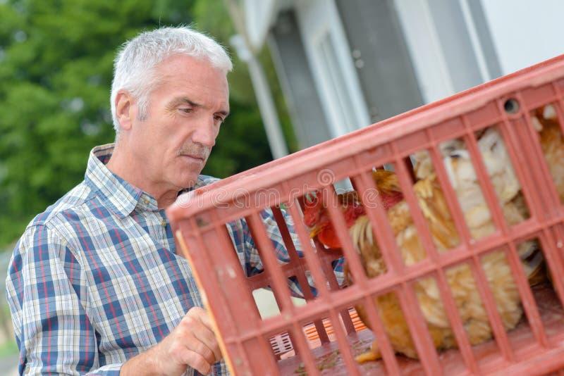 Landwirt, der Henne in der Plastikkiste betrachtet lizenzfreie stockfotografie