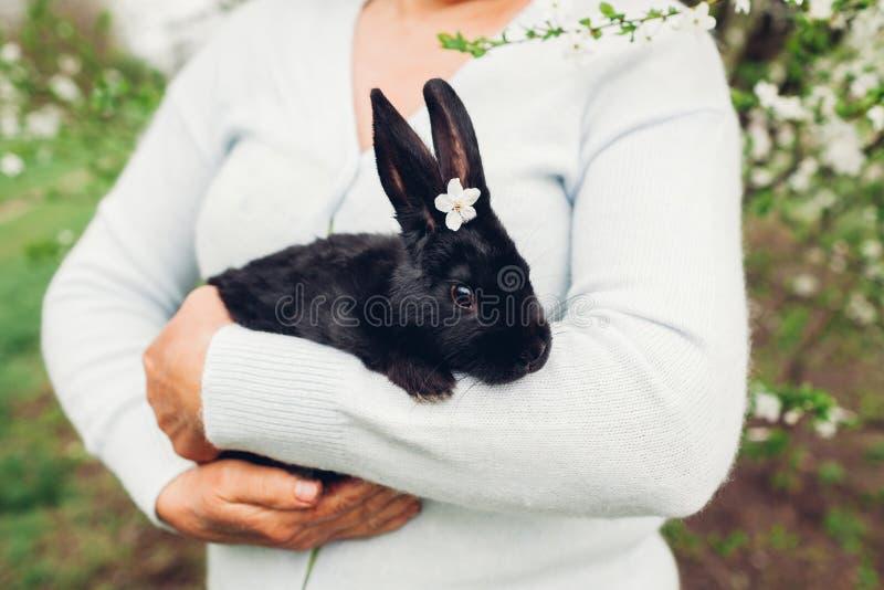 Landwirt, der im Frühjahr schwarzen Garten des Kaninchens hält Kleines Häschen mit Blumen auf dem Kopf, der in den Händen sitzt lizenzfreie stockfotografie