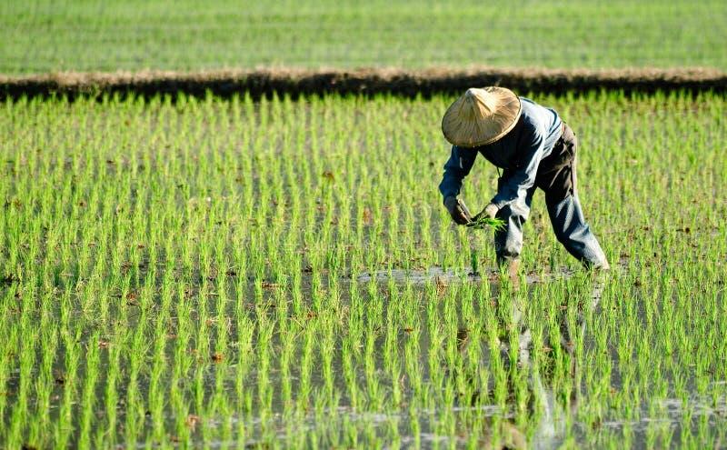 Landwirt, der im fram arbeitet lizenzfreie stockfotografie
