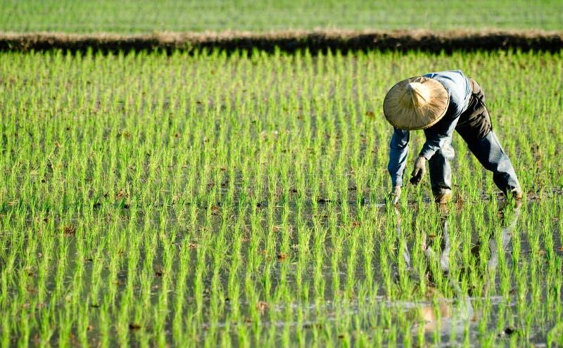 Landwirt, der im fram arbeitet stockfotografie