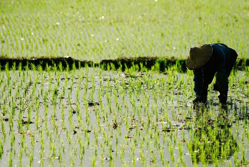Landwirt, der im fram arbeitet stockbild