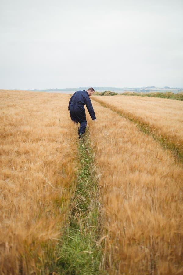 Landwirt, der seine Ernten überprüft lizenzfreie stockfotografie