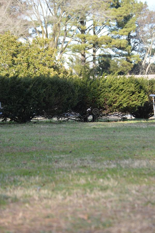 Landwirt Grass 2 stockfotografie