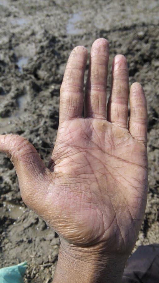 Landwirt Hand lizenzfreie stockfotografie