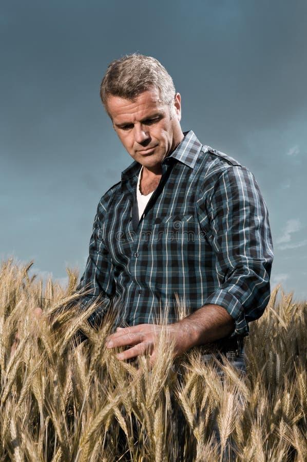 Landwirt hat Sorgfalt seines Weizenfeldes lizenzfreie stockfotografie