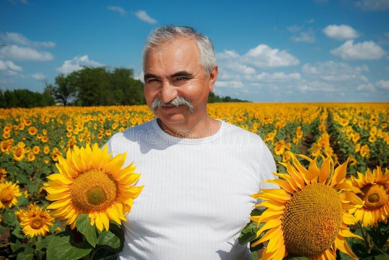 Landwirt im Sonnenblumenfeld stockfotos