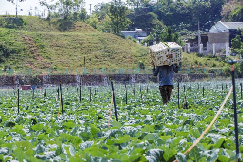 Landwirt ist auf Feld stockfotografie