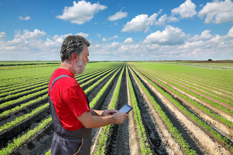 Landwirt kontrollieren Karottenfeld stockbild