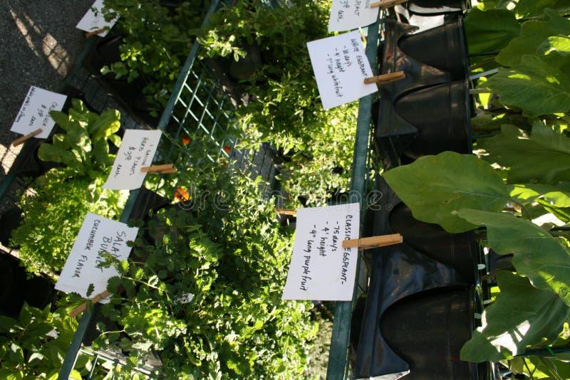 Landwirt-Markt-Kräuter stockbilder