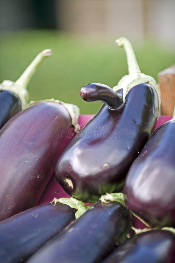 Landwirt-Marktauberginewekzeugspritze stockfoto