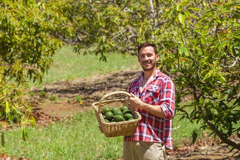 Landwirt mit Avocados lizenzfreie stockfotografie
