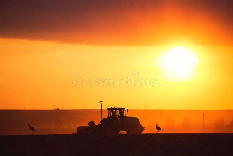 Landwirt mit dem Traktor, der Ernten an den Feld- und Storchschattenbildern sät stockfotografie