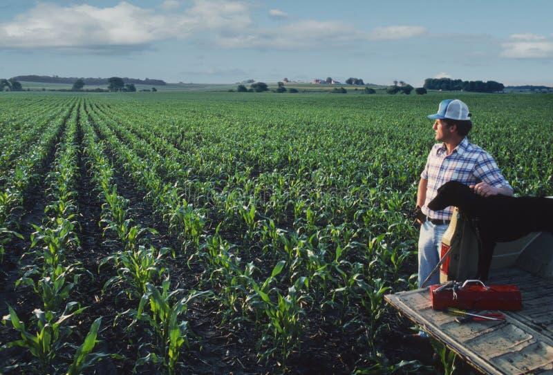 Landwirt mit Hund am Getreidefeld stockbilder