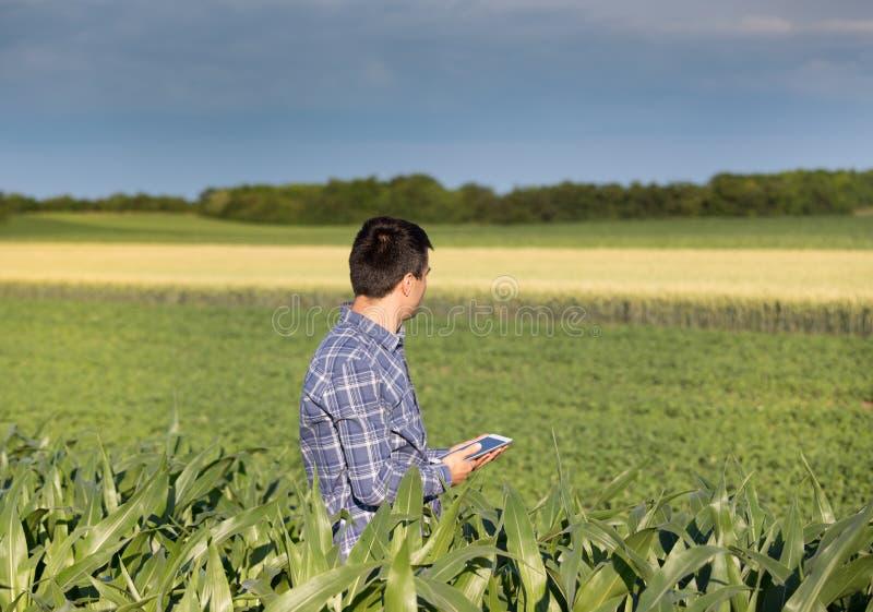 Landwirt mit Tablette auf dem Maisgebiet lizenzfreie stockfotos