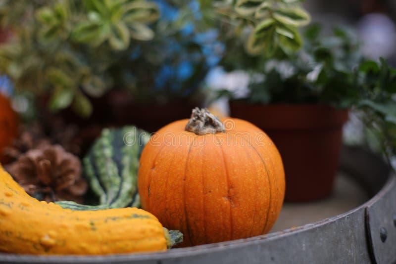 Landwirt ` s Kürbise für das Herbstfestival stockbilder