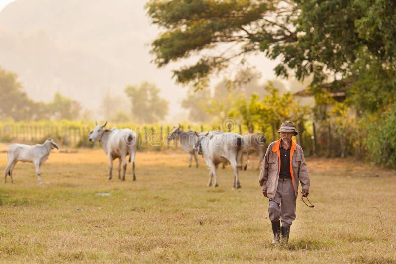 Landwirt und Kühe lizenzfreies stockfoto