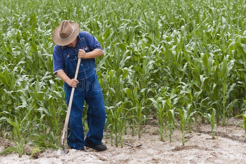 Landwirt-wachsender Mais lizenzfreies stockfoto