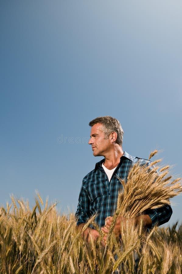 Landwirt-Zufriedenheit an der Ernte lizenzfreie stockfotografie
