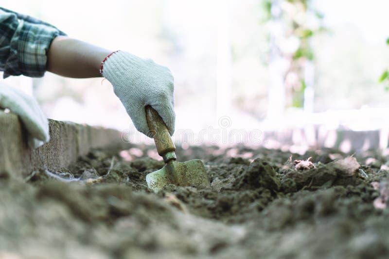 Landwirte überprüfen den Boden auf landwirtschaftlichen Kulturen stockfoto