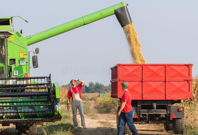 Landwirte überprüfen Sojabohne im Anhänger nach Ernte stockbilder