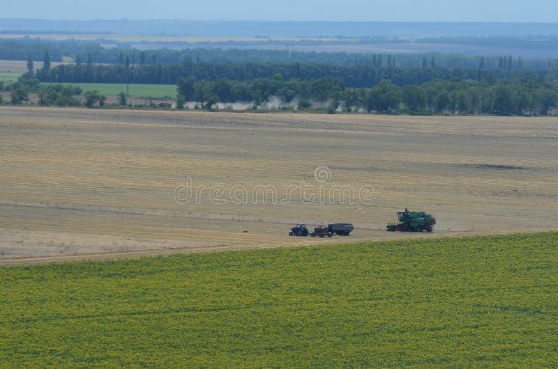 Landwirte, die auf dem Gebiet des Weizens ernten stockfotos
