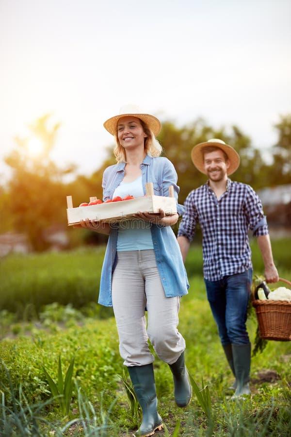 Landwirte, die Korb und Kiste mit Gemüse halten lizenzfreies stockfoto
