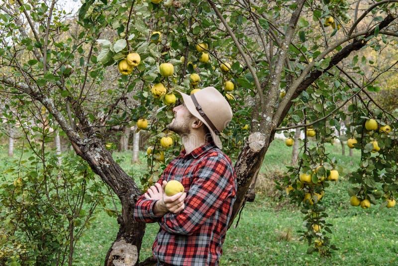 Landwirte vermarkten, gesundes Lebensmittel: Landwirtmann erfasst organisches homegr lizenzfreie stockfotografie
