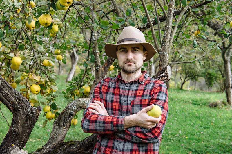 Landwirte vermarkten, gesundes Lebensmittel: Landwirtmann erfasst organisches homegr lizenzfreies stockfoto