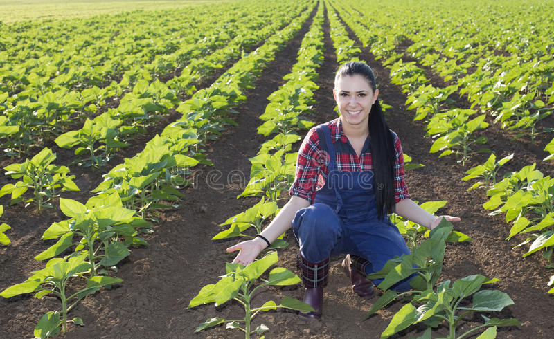 Landwirtmädchen im Sonnenblumenfeld lizenzfreies stockfoto