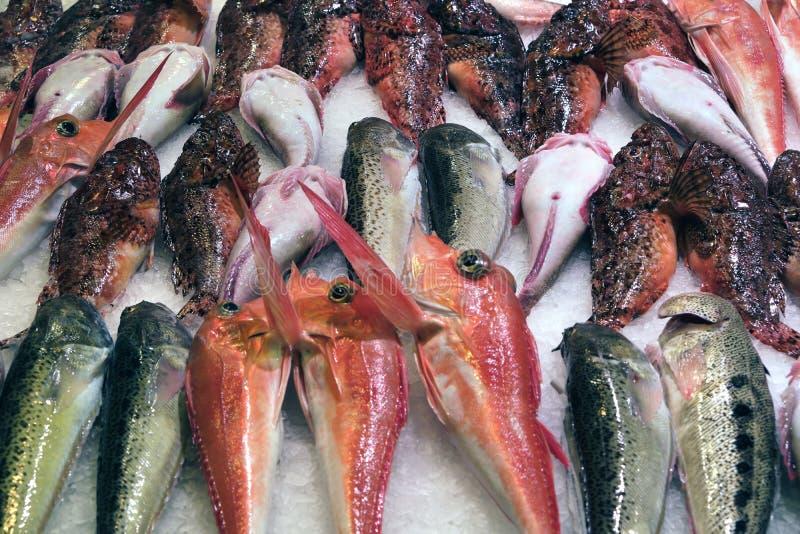 Landwirtmarkt-Stallanzeige Palma Mallorca Spain der frischen Fische stockfotos