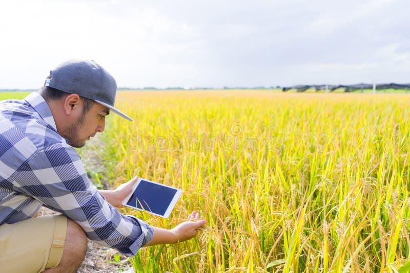 Landwirtneue generation unter Verwendung des Tablet-Computers für Forschung und das Studieren der Entwicklung des Reisfeldes, Pro stockbild