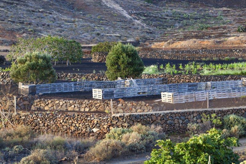 Landwirtschaft auf Lanzarote stockfoto