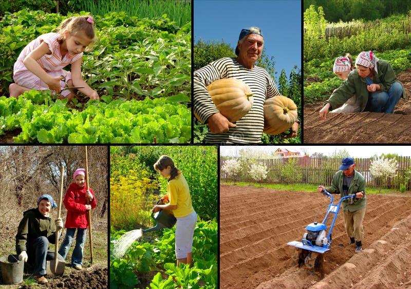 Landwirtschaft der Collage lizenzfreie stockfotos