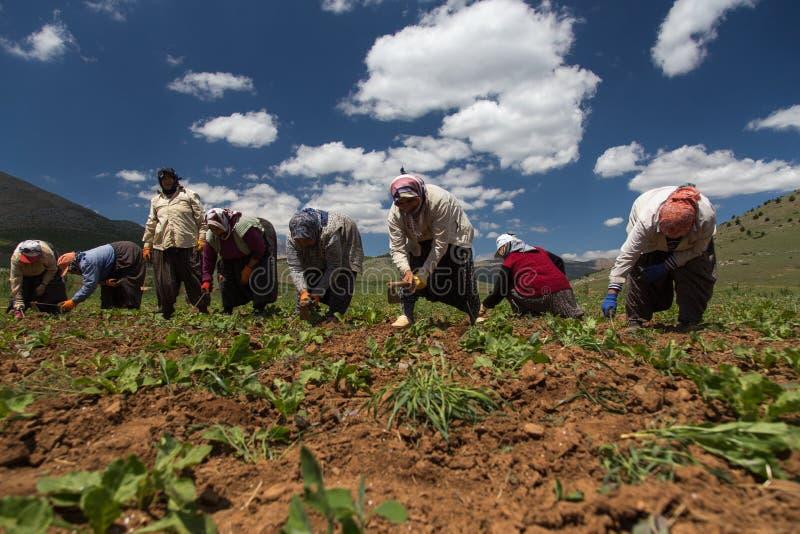 Landwirtschaft in der Türkei lizenzfreie stockbilder