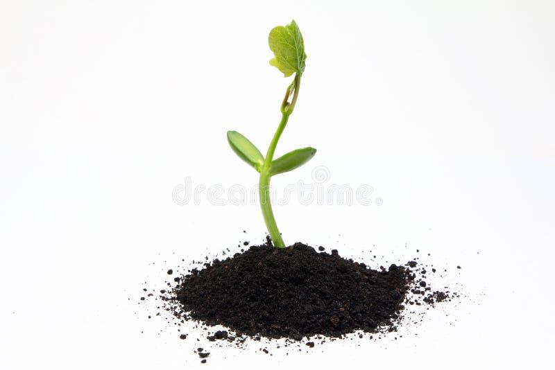 Landwirtschaft des organischen Düngemittels lizenzfreie stockfotos