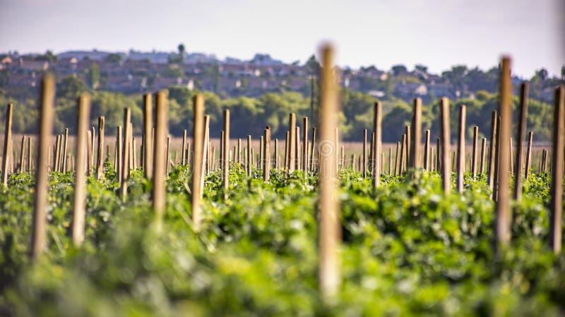 Landwirtschaft in Fallbrook, Süd-Kalifornien lizenzfreies stockbild