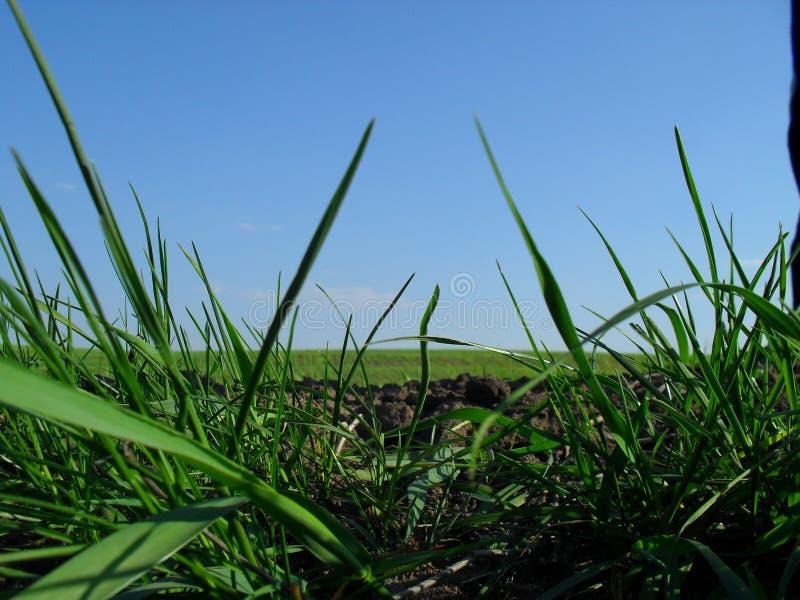 Landwirtschaft, gewachsenes Feld stockfotos