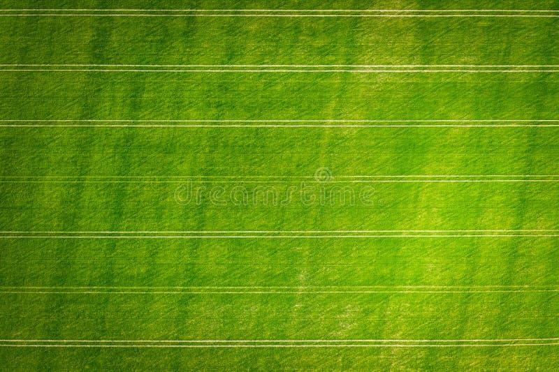 landwirtschaft Grünes Feld des Weizens von oben Landwirtschaftshintergrund stockfotografie