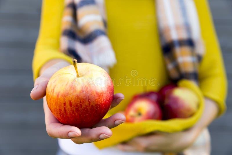 Landwirtschaft, im Garten arbeitend, erntend, Fall und Leutekonzept - Frau mit Äpfeln am Herbstgarten lizenzfreies stockfoto