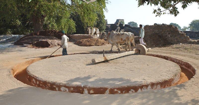 Landwirtschaft in Indien lizenzfreies stockfoto