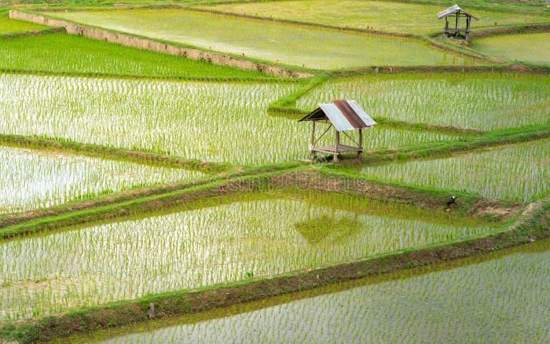 Landwirtschaft Jahreszeit - Draufsichtgrünreisfelder und -häuschen in Thailand lizenzfreie stockfotografie