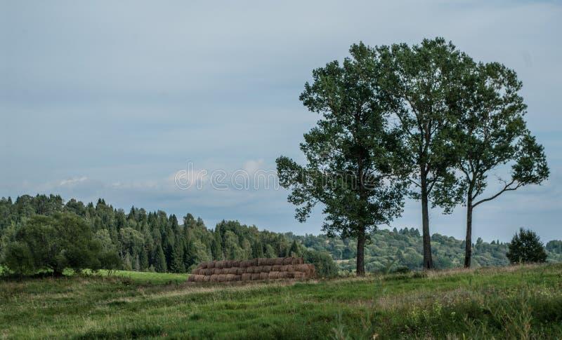 Landwirtschaft, Landschaftsansicht lizenzfreies stockbild