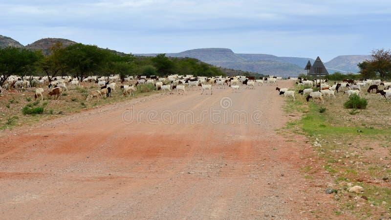 Landwirtschaft in Namibia stockfotos