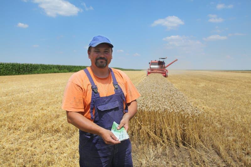 Landwirtschaft, Weizenernte lizenzfreies stockbild