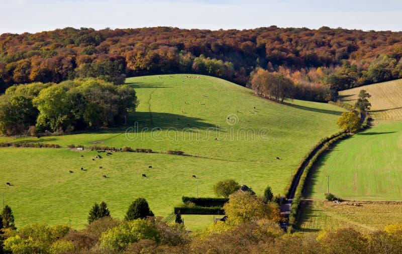 Landwirtschaftliche Ansicht in das Chilterns im Herbst lizenzfreie stockfotos