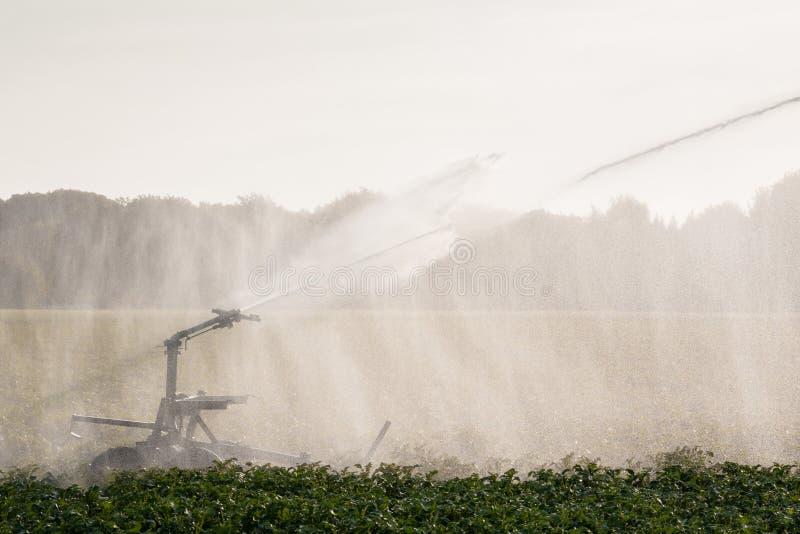 Landwirtschaftliche Bewässerung mit Sprinkleranlage lizenzfreies stockbild