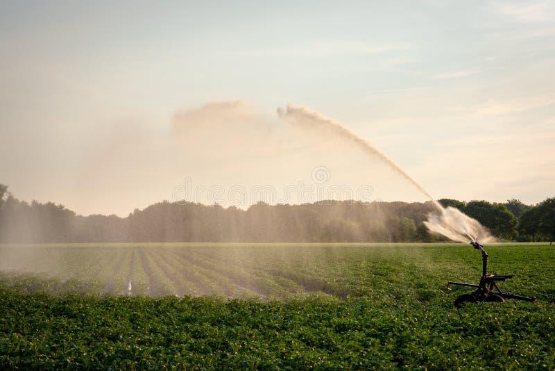 Landwirtschaftliche Bewässerung mit Sprinkleranlage stockfoto