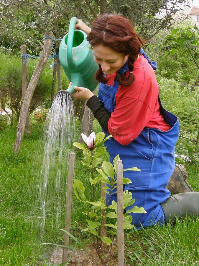 Landwirtschaftliche Frau, die gepflanzte Magnolie wässert lizenzfreie stockfotografie
